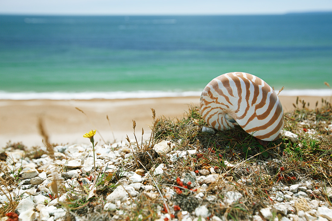 Sea shell by Bournemouth beach